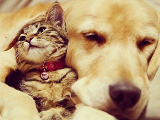 PHOTOS: Rescue Cat & Golden Retriever Can't Stop, Won't Stop Cuddling