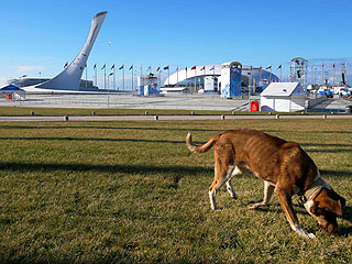The Daily Treat: Russian Billionaire Trying to Save Sochi's Stray Dogs