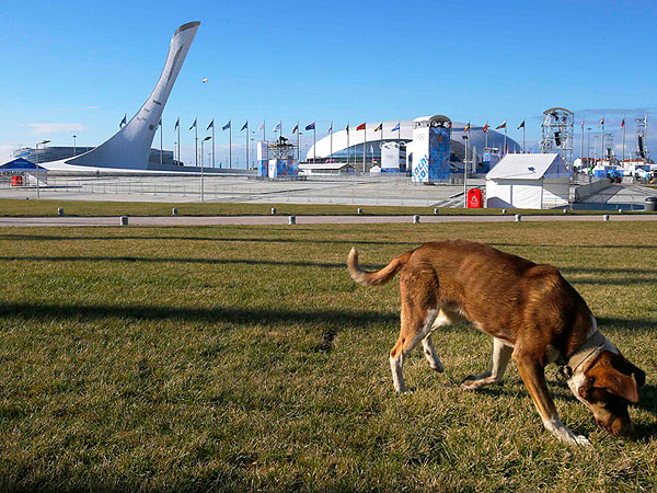 Sochi Olympics: Russian Billionaire Trying to Save Stray Dogs