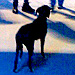 PHOTO: Stray Dog in Sochi Attends Olympics Opening Ceremony