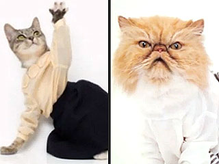 PHOTOS: What Your Cat Thinks About Fashion Week