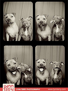 Pit Bulls Take Best Photo Booth Selfie Ever