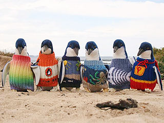 Australian Rescue Penguins in Need of Hand-Knit Sweaters | Animals & Pets, Cute Pets, Pet News