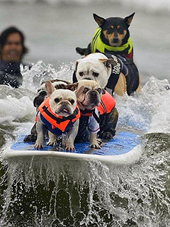 The 5 Most Perfect Photos of Dogs Surfing in Australia