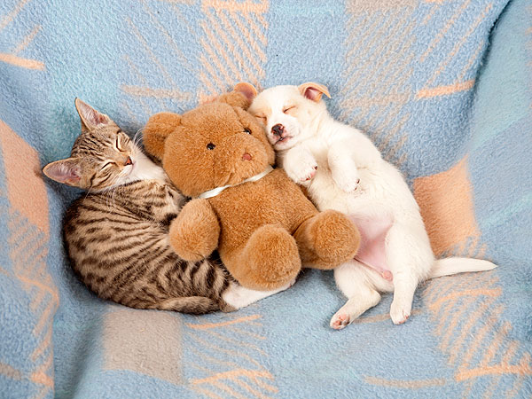 The Daily Treat: Celebrate National Pet Day with These Adorable Dogs and Cats| Animals & Pets, Cats, Cute Pets, Dogs