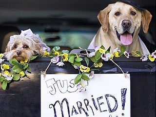 From Puppy Love to Wedding: See a Doggy Relationship Unfold | Animals & Pets, Cute Pets, Funny Pets, Pet News