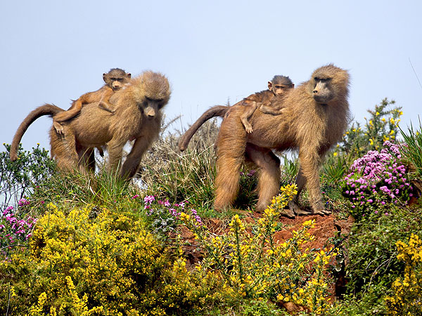 monkeys 600x450 The Daily Treat: 7 Reasons to Celebrate Earth Day