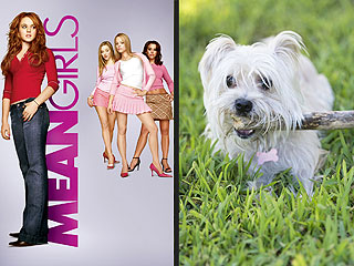 Mean Girls 10th Anniversary: 5 Dogs Still Trying to Make Fetch Happen | Mean Girls