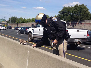 The Daily Treat: Policeman Helps Rescue Chihuahua from Highway Median