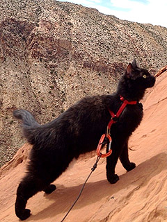 Meet a Mountain-Climbing Rescue Cat | Cute Pets, Pet News, Talented Pets, Unusual Pets