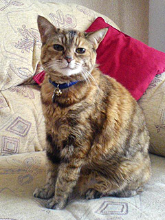 The Daily Treat: Meet the World's Oldest Living Cat, 24-Year-Old Poppy | Animals & Pets, Cats, Pet News, Talented Pets, Unusual Pets