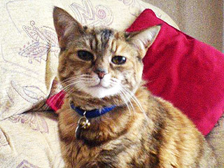 Meet the World's Oldest Living Cat, 24-Year-Old Poppy | Animals & Pets, Cats, Pet News, Talented Pets, Unusual Pets