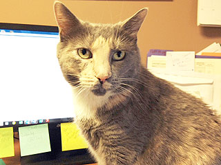 Adopt Me! Juliette Wants to Be Your Purr-manent Office Mate