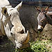 Depressed Rhino Befriends Donkey at Zoo