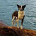 Dog Drifting at Sea Rescued by New Zealand Navy