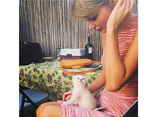 Meet the Newest (Furry) Love of Taylor Swift's Life | Taylor Swift