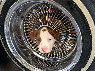 Firefighters Rescue Pup Stuck in Wheel – See the Photo