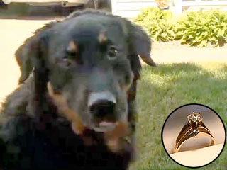 Dog Returns Missing Wedding Ring That He Swallowed