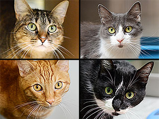 Real Estate Attorney Leaves $800,000 to Shelter Cats