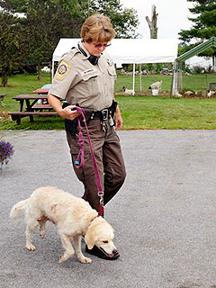 Hero Dog Helps Owner Fight Off a Black Bear