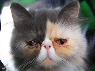 The Daily Treat: See Why This Sad-Looking Cat Makes Us So Happy