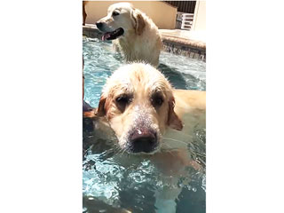 WATCH: Puppy Blows Bubbles in the Pool on Demand, Enjoys Dog Days of Summer