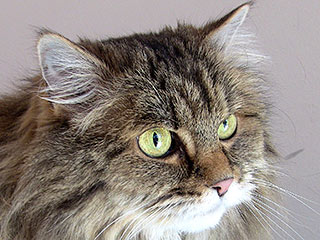 Terminally Ill Man Seeks Home for Beloved Cat