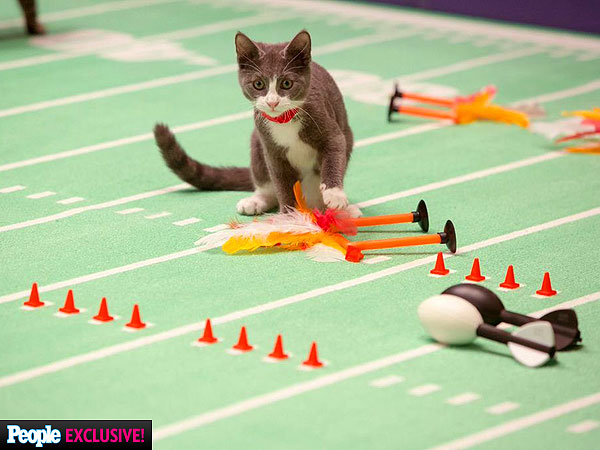 The Daily Treat: PEOPLE Takes You to the Kitten Bowl