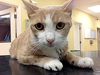 The Daily Treat: Cat Saved by Dog Blood Transfusion