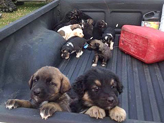 20 Puppies Abandoned in Canadian Wilderness Inspire Outpouring of Help