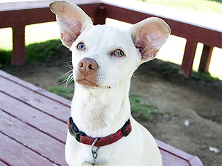 Adopt Me! Ricky Is the Dog People Dream Of Owning