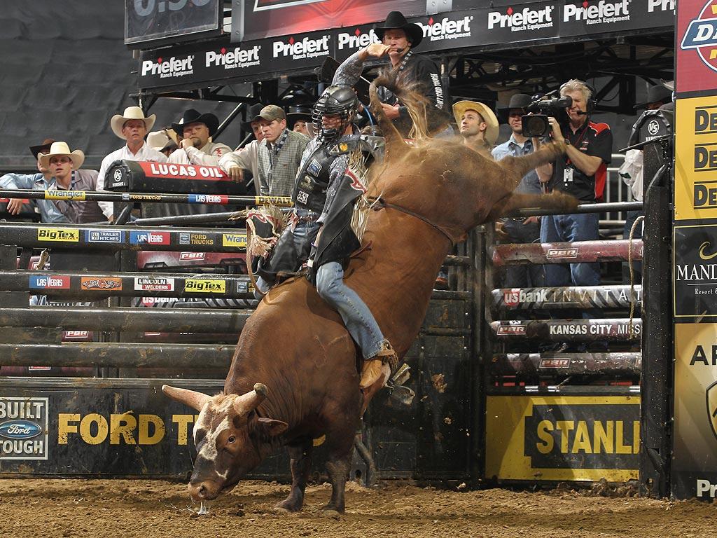 Bushwacker The Bull