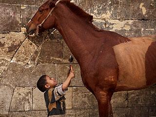 Meet the Donkey Barber Grooming Cairo's Animals