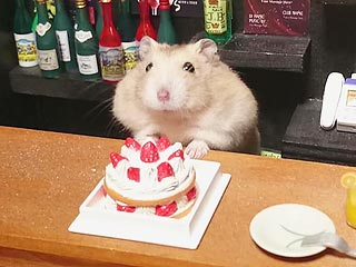 Tiny Hamster Bartenders Serve Up Major Cuteness