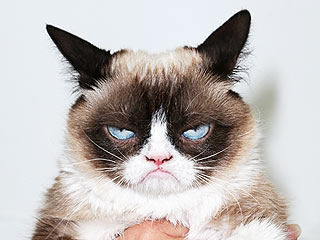 Grumpy Cat's New Gig Is Going to Be a Major Cat Fight