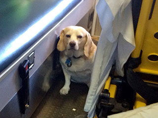 Rancher's Dog Hops on Moving Ambulance to Stay Close to His Owner