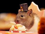 Food Coma! Watch Hamsters Gobble Down a Tiny Thanksgiving Dinner