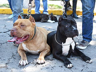 Dog Group to Hold Pit Bull Parade After Ban on Breed Dropped