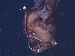 Rare 'Seadevil' Fish Caught on Film for the First Time (VIDEO)