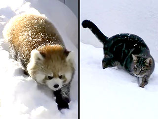 Let It Snow: See Animals Who Can't Get Enough of the White Stuff (VIDEO)