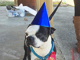 Family Throws Neglected Dog a Heartwarming Goodbye Party