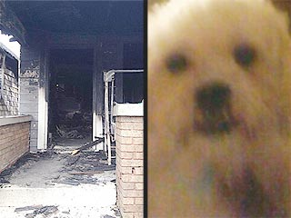 Dog Dies in Fire After Saving 7 Lives