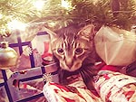 Cats vs. Christmas Trees, The Ultimate Compilation