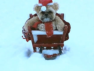 Dog Dresses as Teddy Bear Santa Sleds Down Hill, Because It's Christmas (VIDEO)