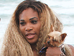 Stars and Their Pets | Serena Williams