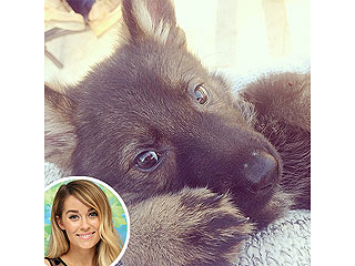 Which Celeb's Furry New Addition Is the Cutest? | Lauren Conrad
