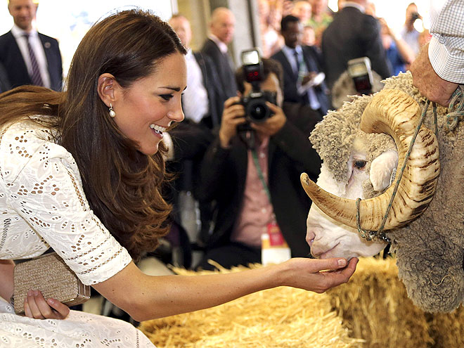 NICE TO SHEEP YOU photo | Kate Middleton