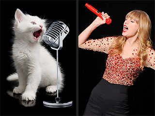 Explaining Taylor Swift's Songs with Pictures of Cats | Taylor Swift