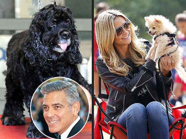 Making the Case for George Klum-y: Why They Need to Date| Breakups, Couples, George Clooney, Heidi Klum