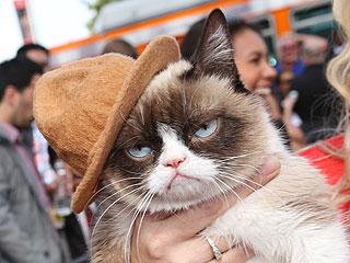 grumpy cat makes american idol debut video mjsbigblog. Black Bedroom Furniture Sets. Home Design Ideas